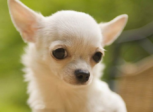 Раздел фото собак категория собаки